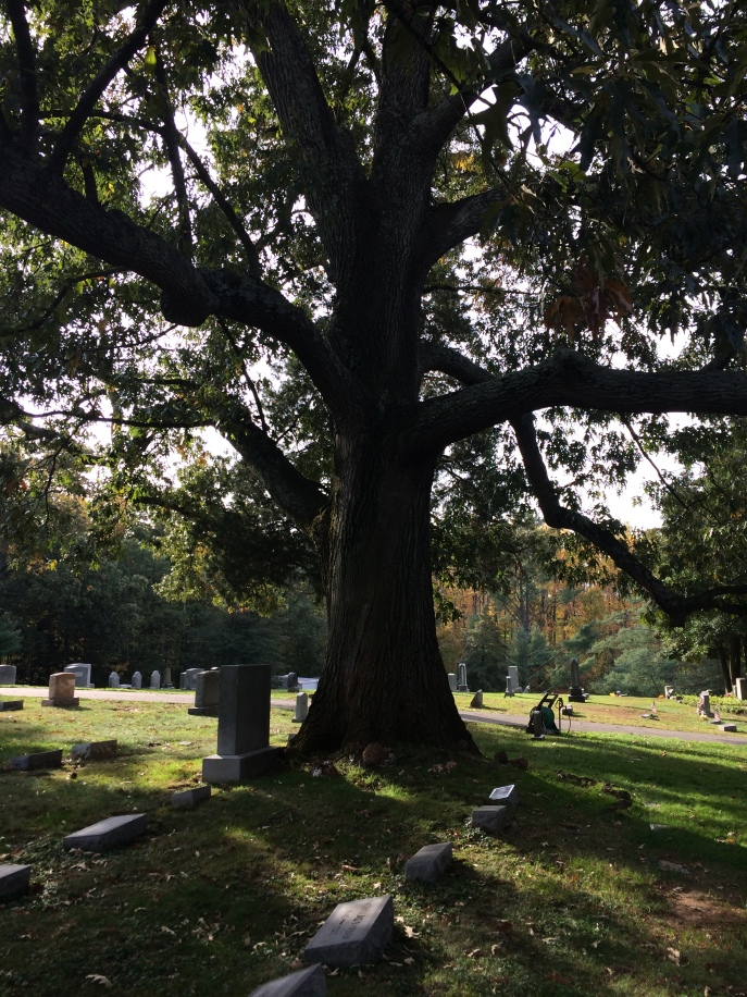 A majestic oak, about 50 feet from the Meade family plot.