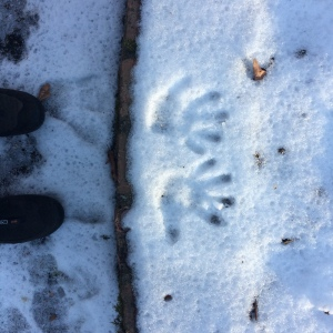 My son's handprints in the snow. Not much of a 'blizzard'.