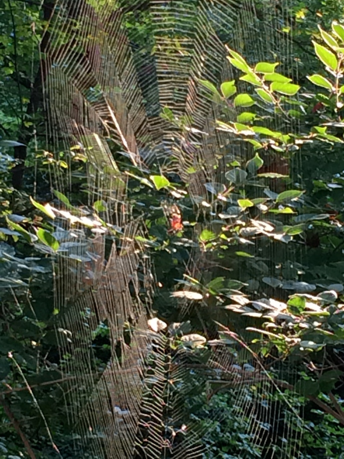 A spider web about a foot and a half across.