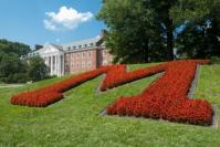 The flowers are always either yellow or red, Maryland state flag colors. That's McKeldin Library in the background. Source: extension.umd.edu