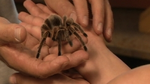 Big. Hairy. Tarantula. Source: WJLA.com