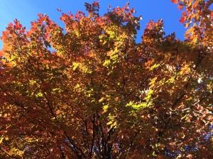 Brilliant color. It's Thanksgiving!